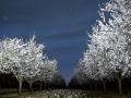 noche-en-blanco-y-azul