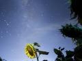 soles-y-estrellas