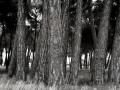 Bienvenido el bosque te vigila