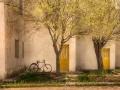 Primavera amarilla